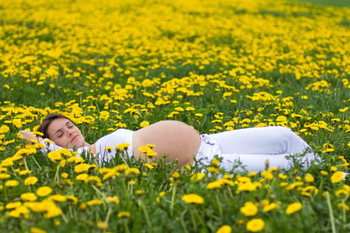 Pregnant lady lie in dandelion field